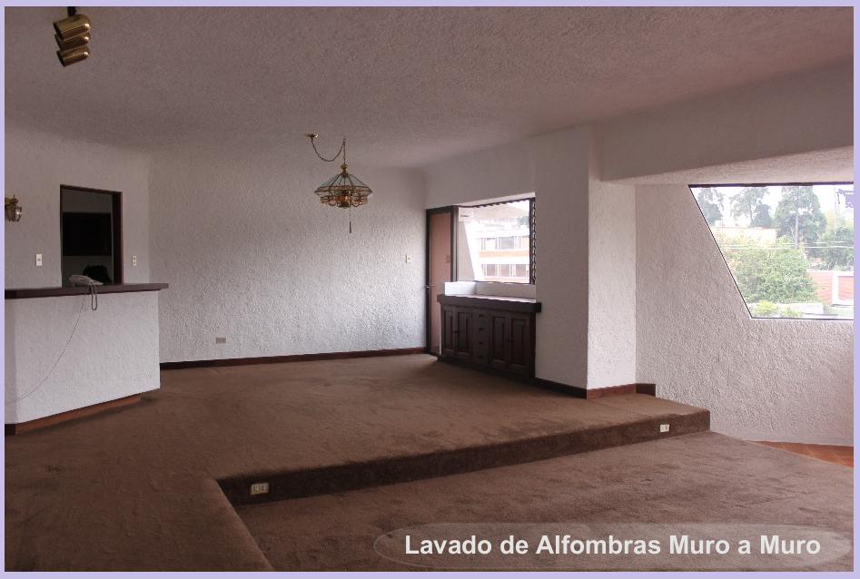 Limpieza alfombras en casa tips removedor de manchas - Limpieza en casas ...